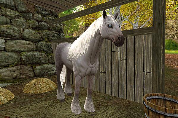White Draft Horse